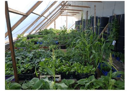 Serre polycarbonate avec plants de légumes