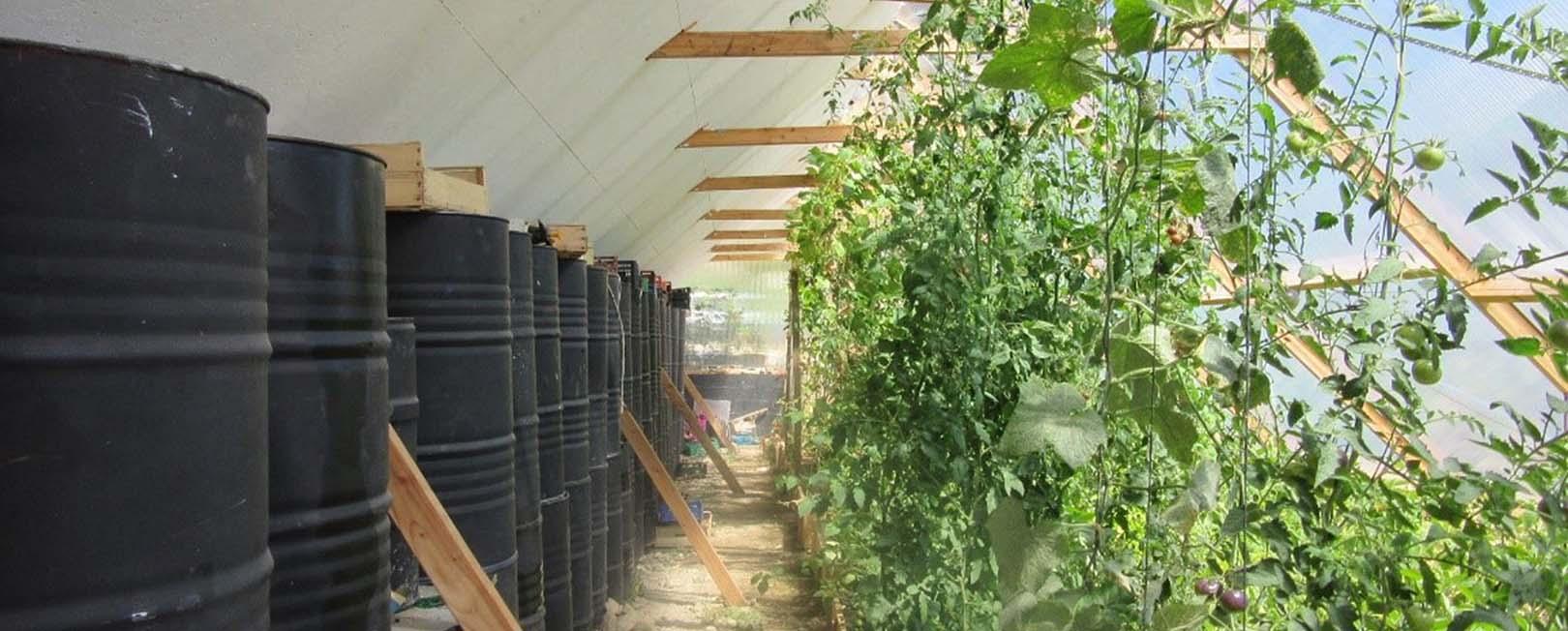 Légumes dans une serre bioclimatique