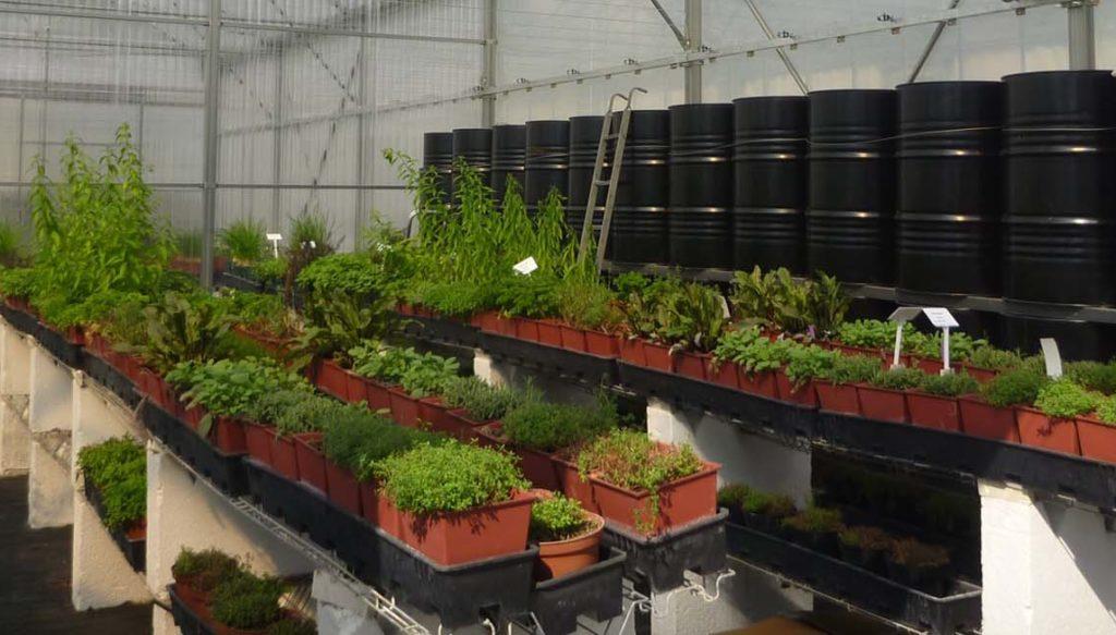 Plantes dans une serre bioclimatique